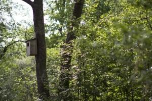 birdhouse-1424729-m